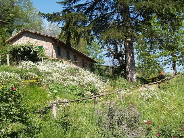 Rural House near Lucca - Monsagrati - Talo