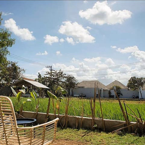 Rice Paddy Hostel Canggu