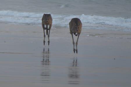 2 Hops Woodgate Beach