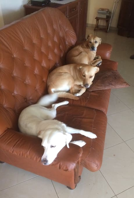 Our three inside dogs :)