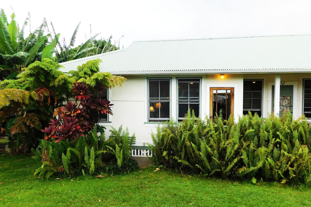 The cottage is surrounded by banana, ferns and other tropical plantings. Photo by William Neal