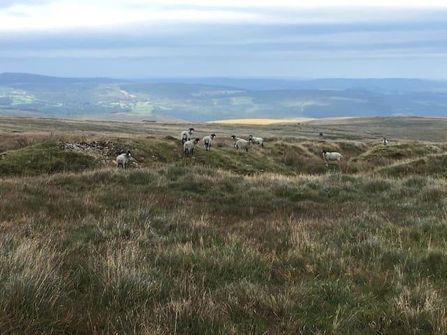 Holne Moor Shepherds Huts - Bench Tor - NEW!