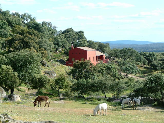 The cortijo with 2 b&b rooms