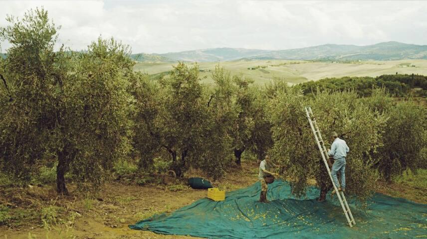 Greek Filoxenia Farm Comfort