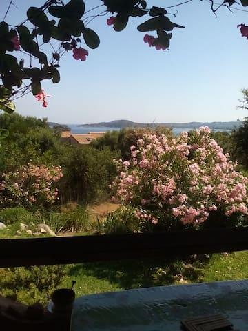 nido sul mare - Zonza - Flat