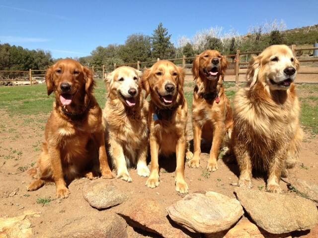 Golden Ambassadors