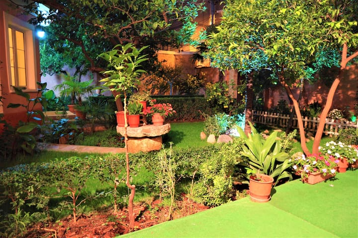 Garden during the night