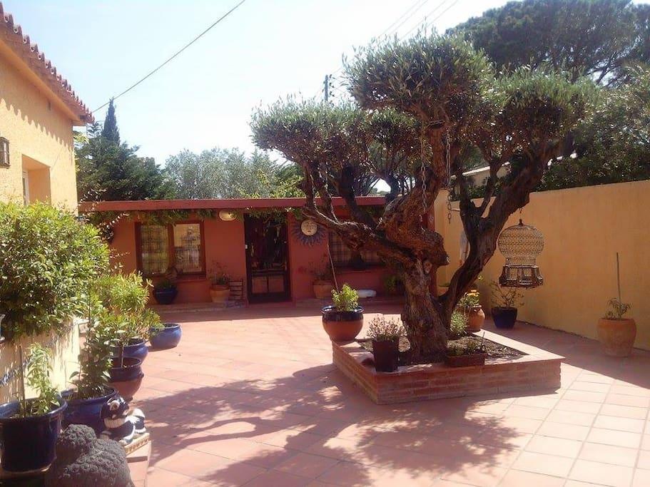 terrasse, avec un bel olivier , une table et chaisse seront poses