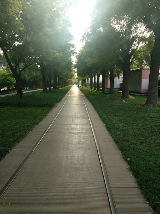 旧时铁路改造,地面是铁轨造就幽静的林荫路延绵数公里,傍晚携手看夕阳