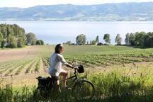 Cycling in Hamar.