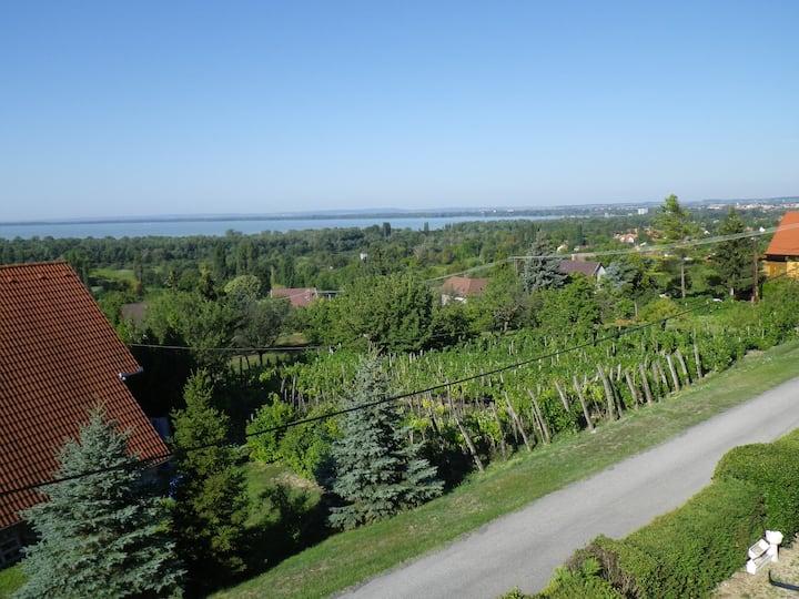 Panoramic view amongst the vineyards