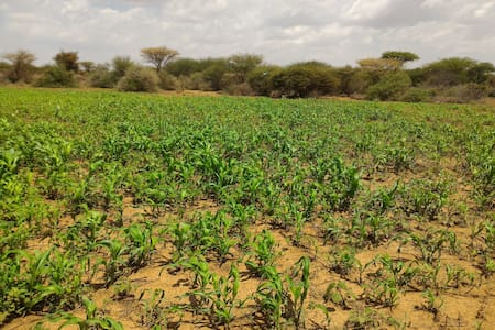 Hargeisa Farm Stay