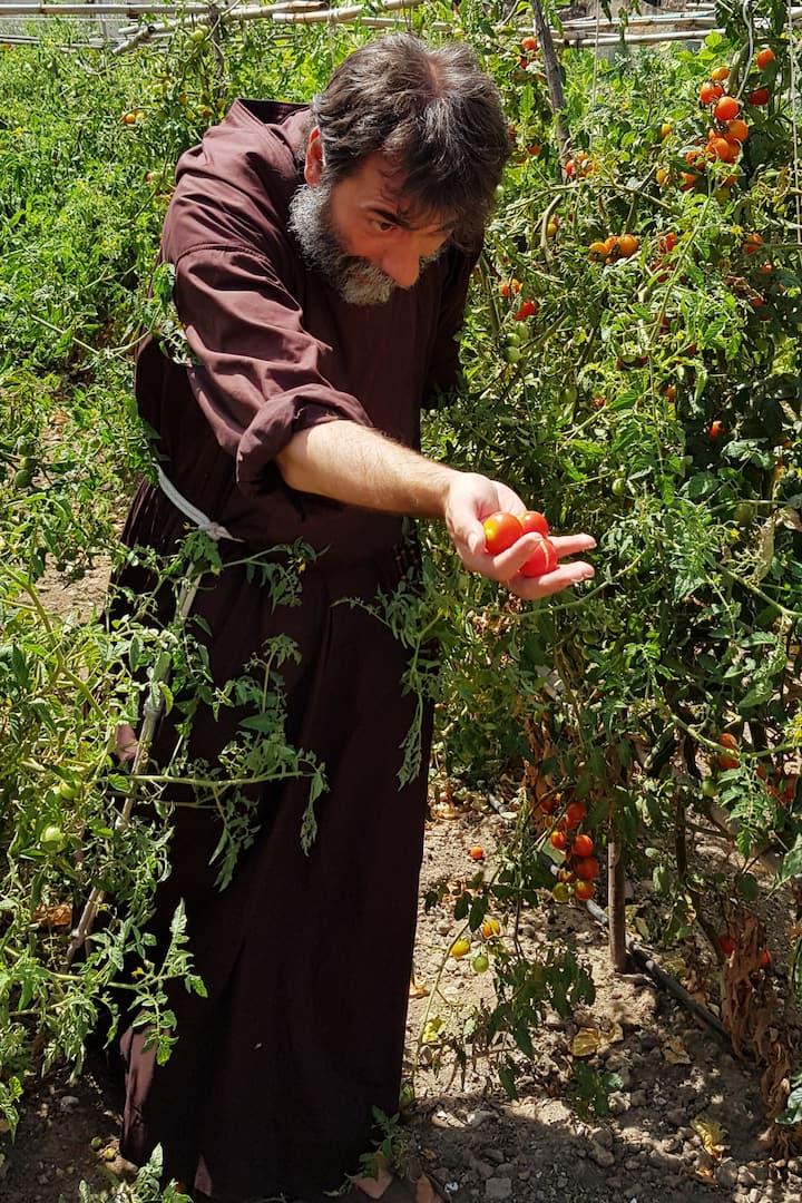 Pomodorini freschi appena raccolti