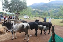 The Forest Farm  Agro Tourism Campsite