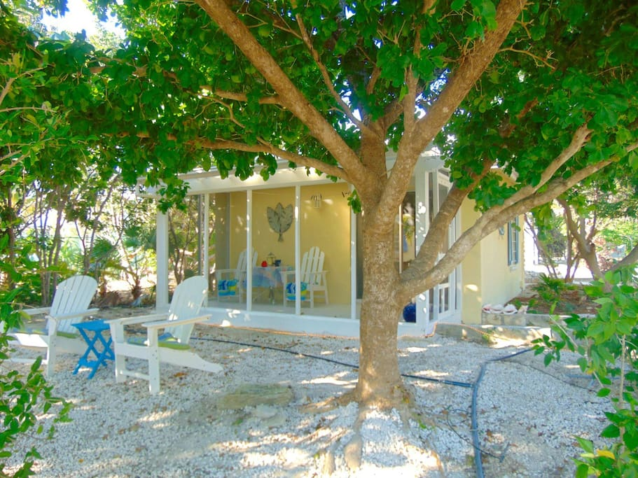 Two South Beach Chairs with cushions under the mature tree provide shade to relax in the warm tropical breeze. There is also a double hammock.