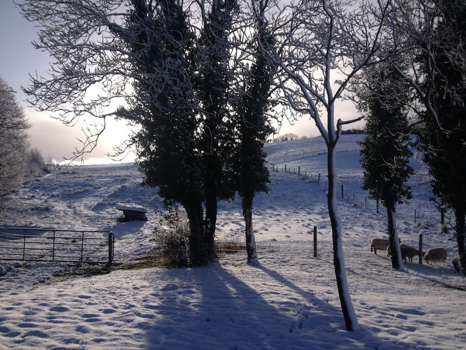 Winter in the sheep field
