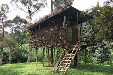 Unique Bamboo Treehouse in Organic Durian Orchard.
