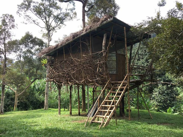 Original Bamboo Treehouse in Organic DurianOrchard