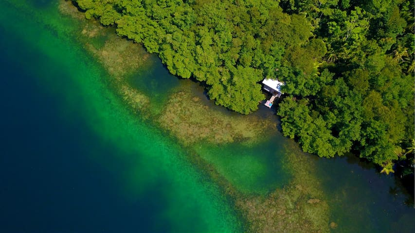 Waterfront Mangrove Treehouse - sloths & coral