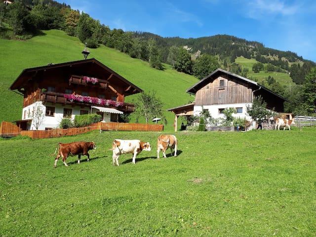 Antenbachhof