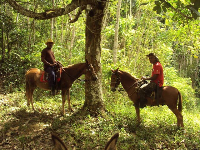Those who enjoy riding on horseback are in the right place here. Osvaldo will happily show you the beautiful scenery here.