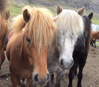 Laugabol horsefarm - Bíldudalur - Bed & Breakfast