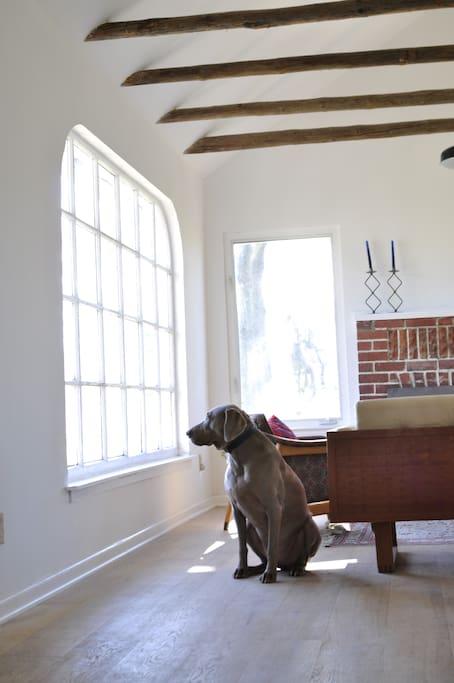 Dog frindly hardwood floors
