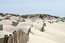 Baleal Dunes