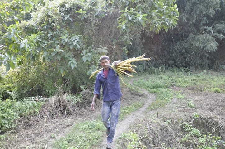 Sugarcane Trails @ Sapoi