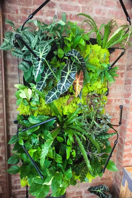 Our living wall is constantly working to keep the air clean for you. We chose the plants that performed best at cleaning the air from NASA's Plant Study. You're welcome to give them a little mist throughout the day; but please don't water them. They're on a strict diet. Thank you!