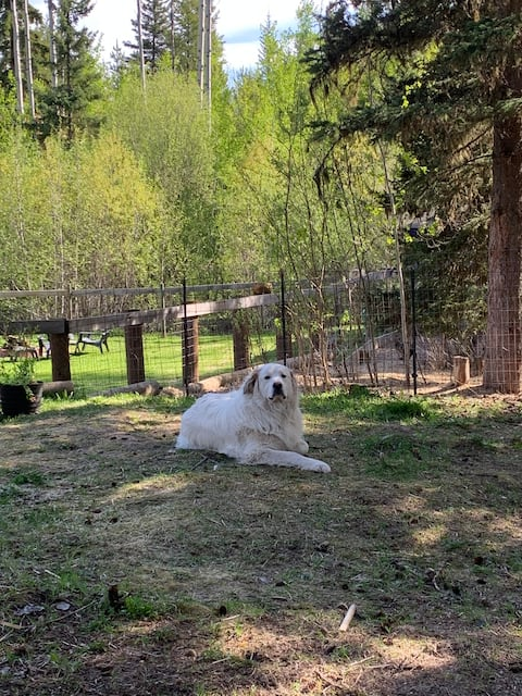 The Great Pyrenees Hideaway
