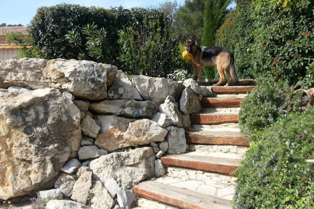 escalier pour la piscine
