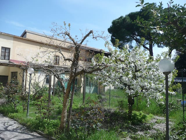 The lemon's garden - Florence - Rumah