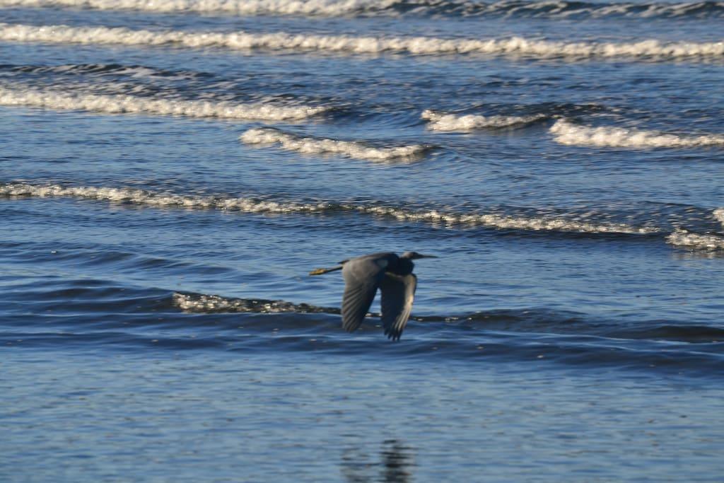 Aves marinas en la playa.