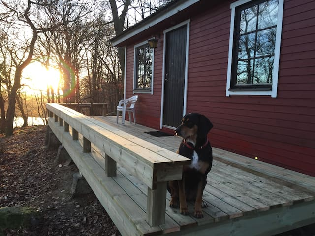 Happy Dogs Ranch-Cabin,  Nature Retreat
