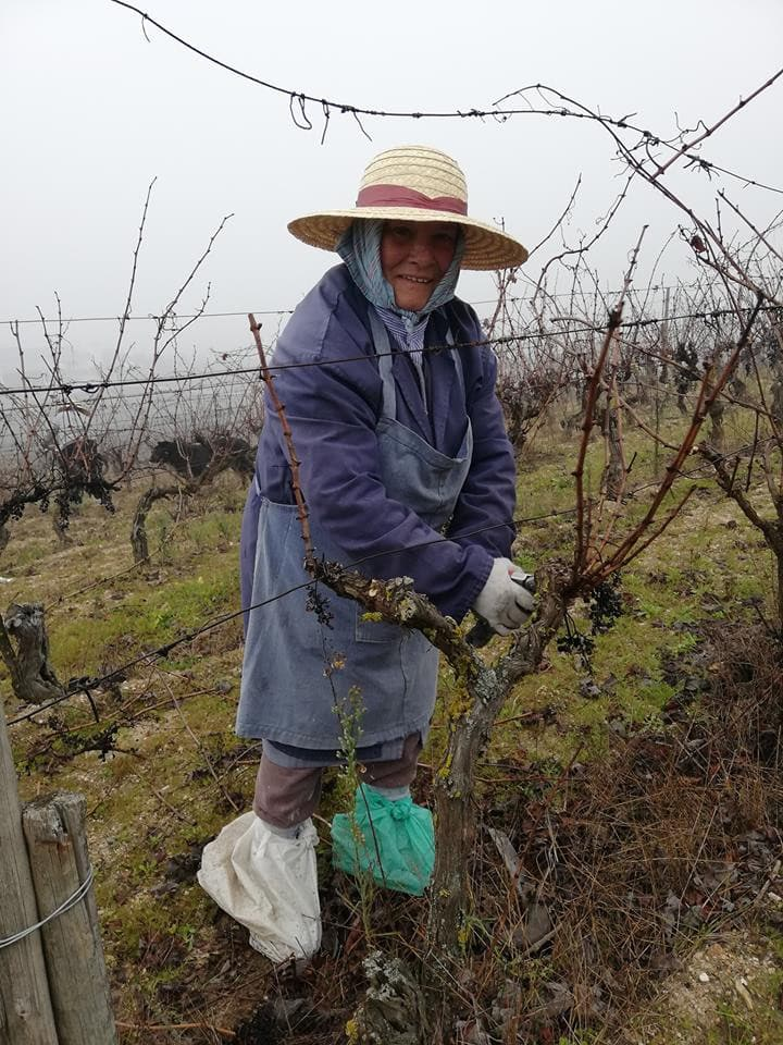 Cutting the vineyards