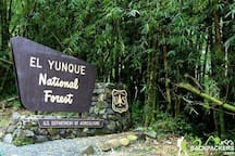 El Yunque is a National Park and is the tropical Rainforest in the National Forest system of The United States.
