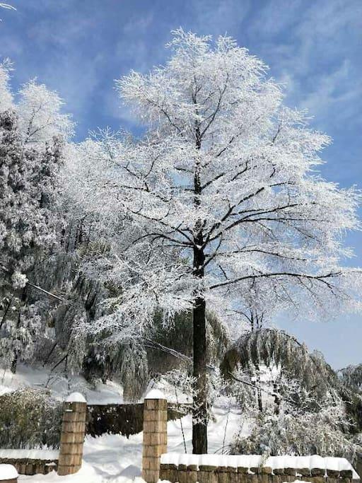 美丽的村子冬天的雾凇