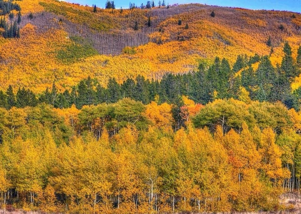 Kenosha Pass, CO, 30 minutes from Stellar Log Cabin. Cabin is surrounded by an aspen forest, as well.