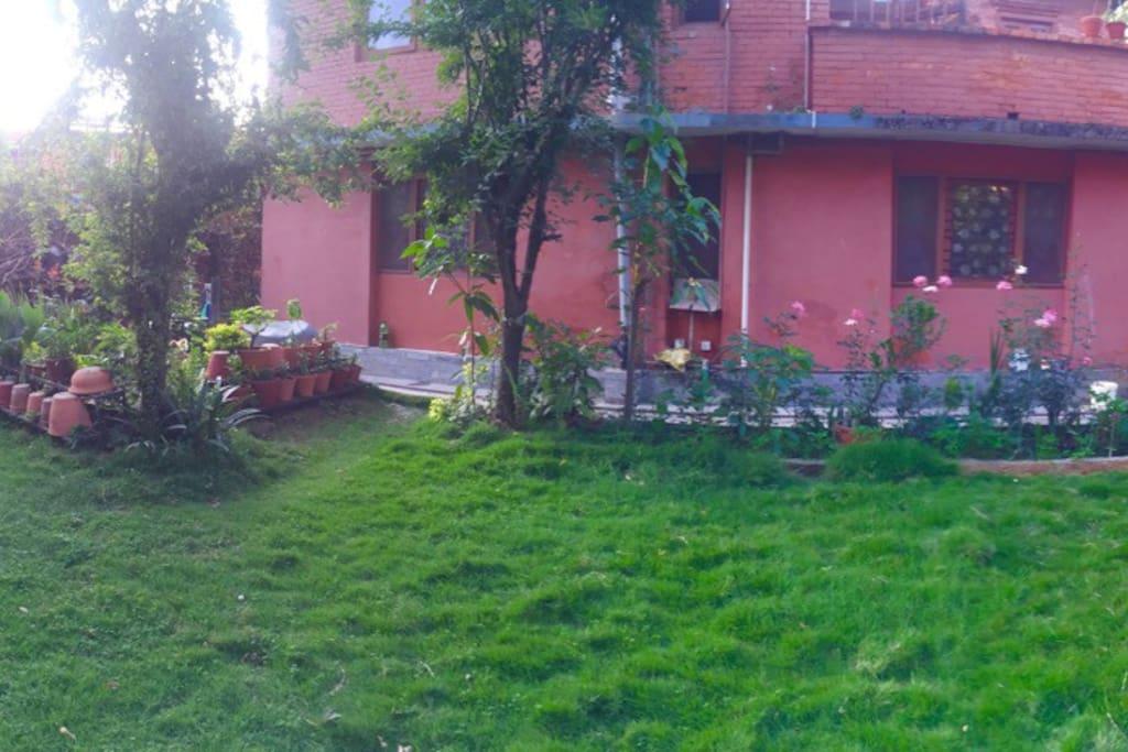 In compound garden green