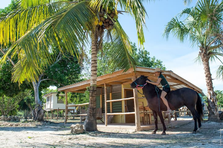 Small cosy cabana in a tropical horse farm