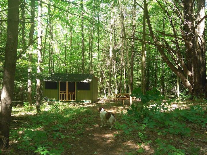 Rustic Retreat Cabin: Writer's Den