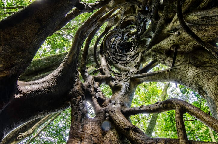 Monteverde 2018 With Photos Top 20 Places To Stay In