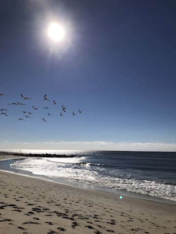 Catch a glimpse of dolphins swimming by in the wave while enjoying this stunning view of the Cape May beach along the promenade