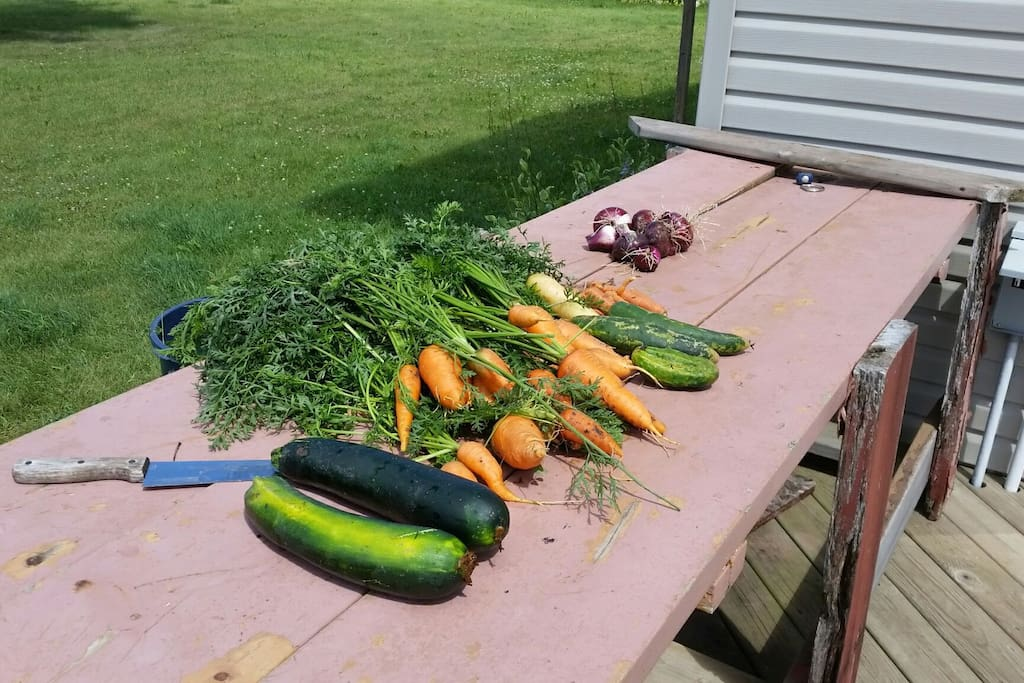 One day of harvest last year