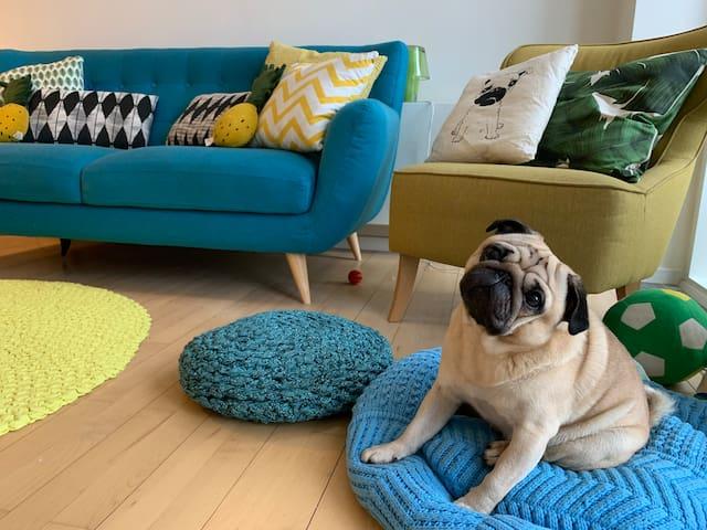 The Cute Pug Guest house