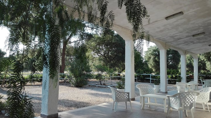 Villa immersed in olive trees