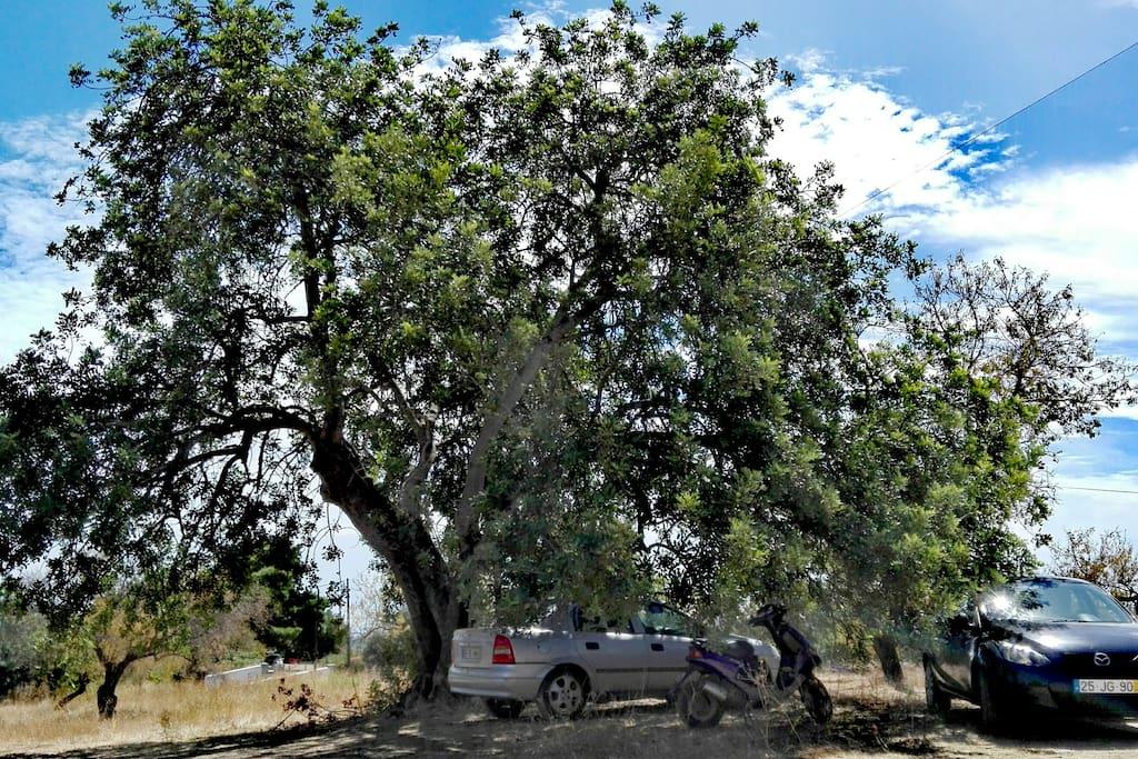 Parking tree car