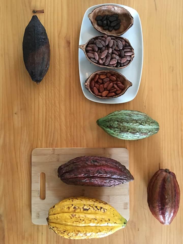 The Anatomy of Cocoa