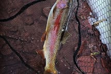 The Frying Pan River is famous for rainbow and brown trout